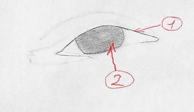 yeux1ex.jpg