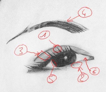 yeux3ex.jpg